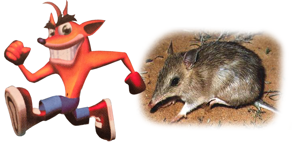 Crash and Bandicoot